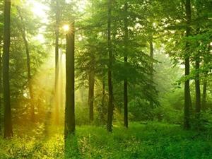 又是一年春光好,市四大班子在家领导义务植树为榆林添新绿