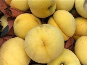 免单节商家——华态农业,免费提供进园采摘门票,采摘水果8折