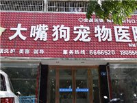宠物洗澡只需9.9!桐城这家宠物医院的老板送福利啦!