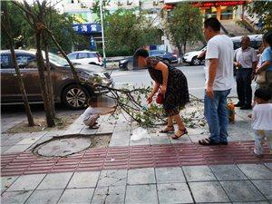 海棠之殇,强烈谴责这种掰断树枝采摘果子的行为!