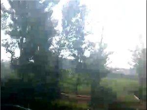 冀州徐庄,昨晚下暴雨,刮大风把路边的大树都给刮断了!