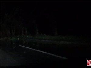 这一场雨可不小,冀州这路边的树全都倒了!太吓人了