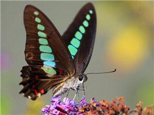 西山漾拍蝴蝶