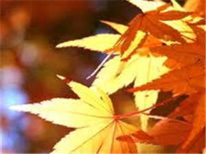 """立秋里的仪式感:今天你""""啃秋""""了没?"""
