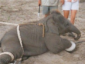 【原创】为生命呐喊,为大象发声!