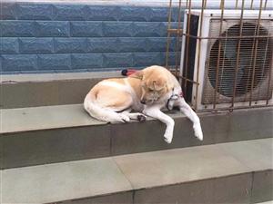 昨天在派出所附近看到的悲伤的狗狗