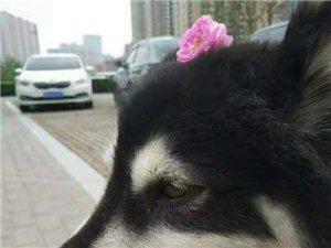 寻找丢失的爱犬!