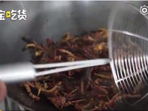 中国人把蚂蚱吃成养殖的!80后夫妻养蚂蚱致富,1年干8个月挣20万
