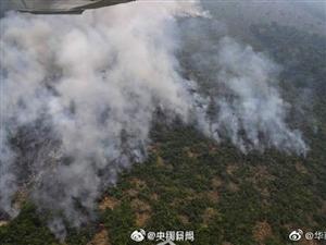 救救地球之肺!亚马孙雨林过火面积超80万公顷