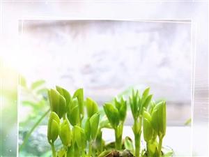 办公室种的绿植、不错吧?