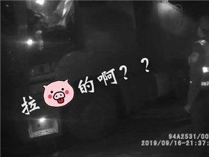 """无证""""二师兄""""坐依维柯乘夜进入泸州,被公安机关查获"""