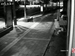 盐亭一女子趁着夜色公然在别人门市前大小便!