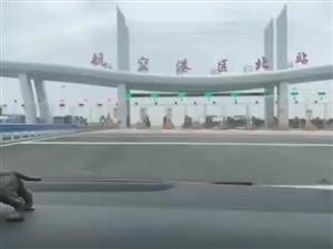 航空港区北站终于开通,航空港区北站终于开通; 实测~豫A牌照七座免费