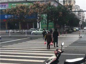 潢川三环路上,螃蟹横行,男子不惧危险,上演街头捡蟹!