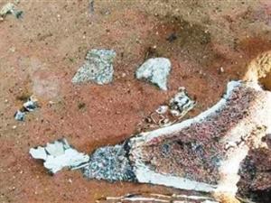 �西首次�l�F�s30�f年前水游蛇化石