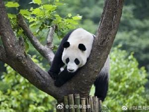大熊猫国家公园陕西省管理局今日挂牌
