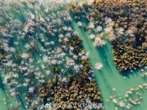 大山深�藏著的迷人仙境:三花石