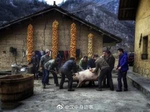 杀年猪,汉中农村这项过年才有的传统民俗大戏即将上演
