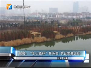 """宿城:""""水上森林""""景色美"""