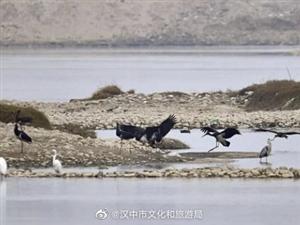 罕�!��家一�保�o�游锖邴X成群落�_�h中��水河