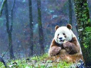大美秦�X的��C――大熊�