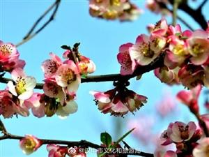 ����:春�M�h江源