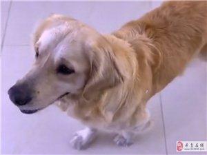 认狗启示:有没认识这狗狗的,在这好多天了,大家相互转发,共同寻找失主!