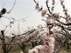 春暖花开,等你归来!冀州如此景象,你见过吗?