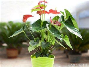 养花就养这些花期超长的花,让家居生活鲜花不断