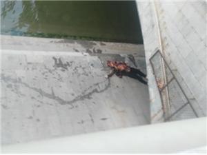 惊!高唐实验幼儿园附近桥下发现浮尸!