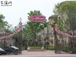 世邦清水湾:玫瑰园开放参观 15#楼已开放预约
