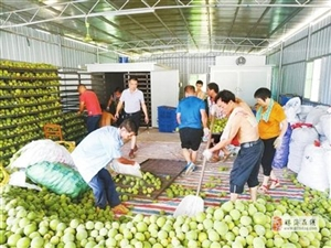珠海高新区对口帮扶化州市4镇11村三年来成效显著 授人以鱼也授人以渔 村民日子越过越好了