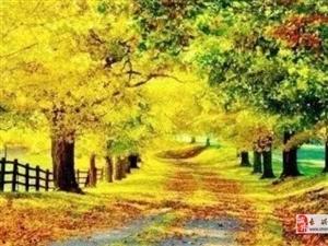我在秋天里,等你!