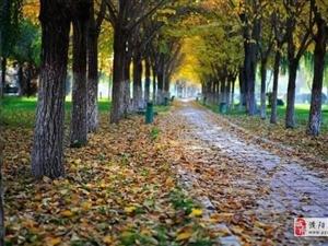 雨又发货!濮阳啥时入秋?来看这张河南各地入秋时间表!