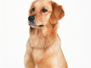 狗狗的嗅觉系统