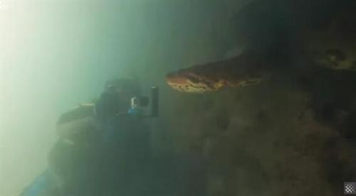 惊险!摄影师水下偶遇7米长巨蟒!对峙画面曝光