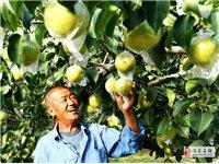一条提高玉露香梨品质的有效途径