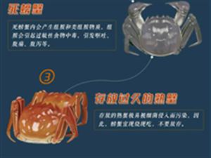 螃蟹怎么吃