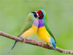 十大宠物鸟排行榜,你应该闻所未闻