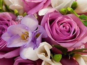玫瑰花的�髡f