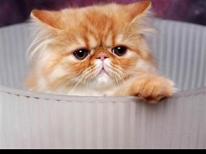 关于猫咪眼睛的颜色,你需要了解的知识