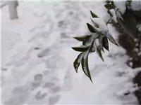 雨雪来袭!未来一周陕西多地降雪,汉中持续小雨