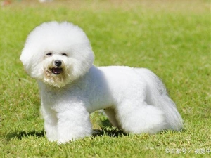 十大白色��物狗品�N!萌翻了