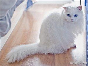 猫咪尾巴7种信号,主人需读懂