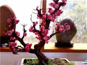 1月家中养这些花,春节有花赏