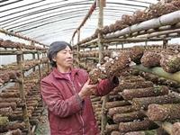 洋县:疫情中,她一人撑起万袋香菇产业