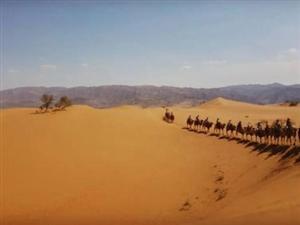 """当""""骆驼时代""""遇上莫河骆驼场"""