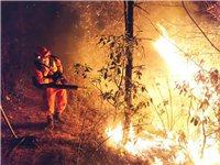 同一天四起山火!丽江、大理、楚雄接连发生山火,该警惕了!