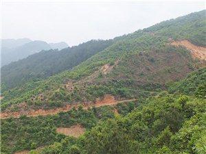 油茶籽常年回收