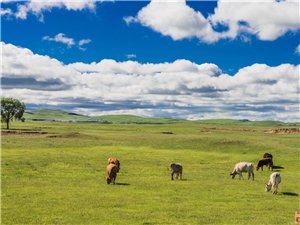 內蒙草原大環線,仰望仰望額爾古納河的星空